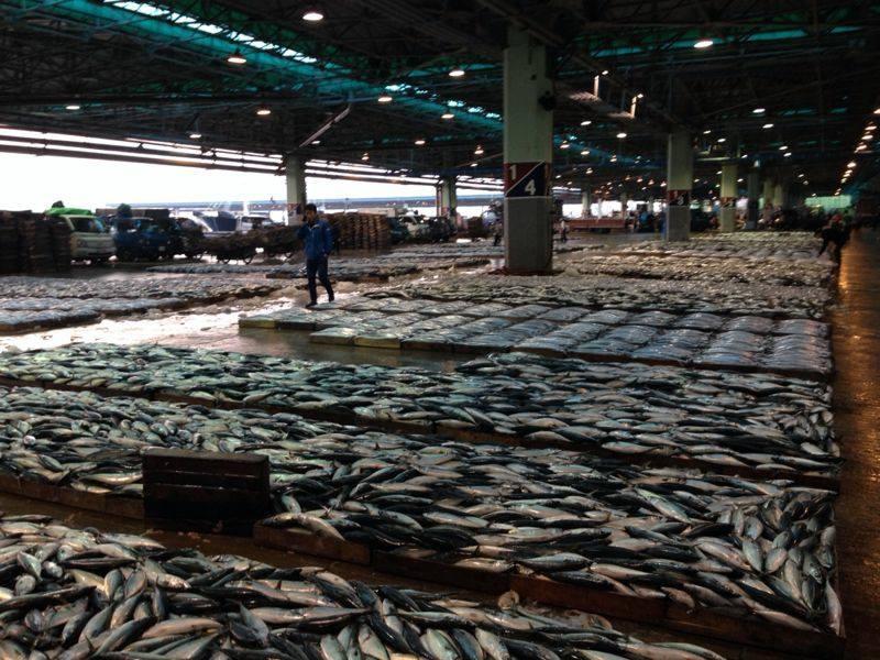שוק הדגים | פוסאן | טיול מאורגן לקוריאה