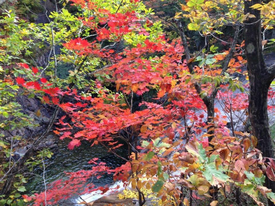 הר סורק | סתיו קוריאני | טיול מאורגן לקוריאה