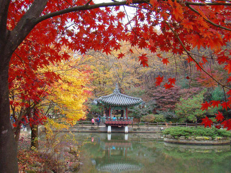 הפאזל הקוריאני | יעל שגיא | Explore korea | טיולים מאורגנים לדרום קוריאה