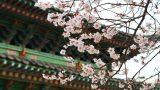 1810007201304025k_Changgeyonggung Palace