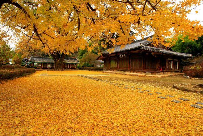 מסע עומק לקוריאה | שיכרון חושים בסתיו הקוריאני | 27/10-10/11/2018 – הטיול מלא