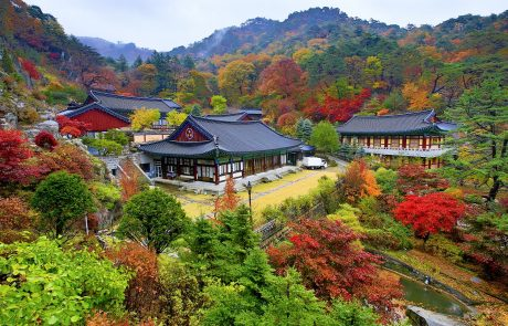 10-24/10/2019 (חומה״ס) | מסע עומק לקוריאה | פסטיבלי הסתיו וצבעי השלכת בהרים – הטיול מלא!
