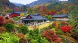 טיול לסתיו הקוריאני | טיול מאורגן לקוריאה | Explore Korea