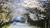 3820142201400046k_Beautiful Road
