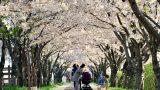 3820515201400076k_Spring Day