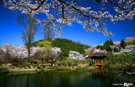 2-16/4/2019 | מסע עומק לקוריאה | פריחת הדובדבן וחגיגות האביב
