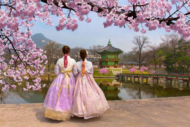 2-16/4/2020   מסע עומק לקוריאה   פריחת הדובדבן וחגיגות האביב • נותרו 2 מקומות אחרונים